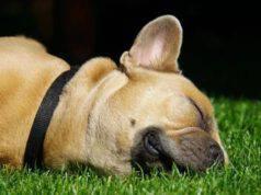 cane dorme fuori in giardino o in casa