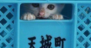 abbattimento gatti