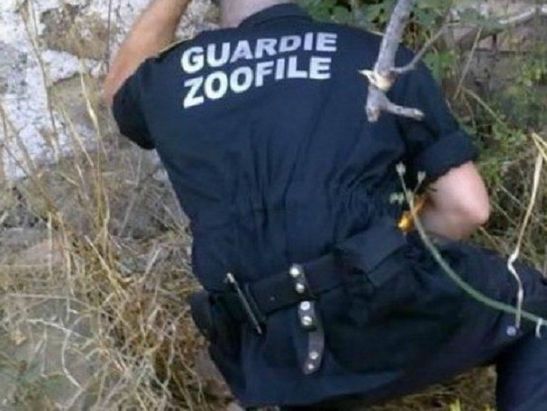 crudeltà cani da caccia