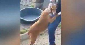 giornalista adotta cane