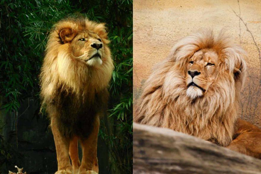 animali cambiano colore