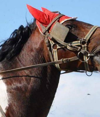stress cavalli