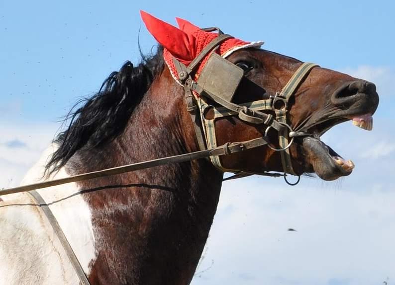 Come si calma un cavallo stressato  ecco i segnali 9121a5c4c6a9