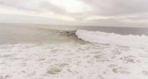 delfini surfisti