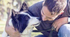 compagne gelose cane