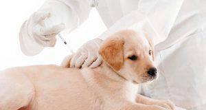 vaccinazione del cane