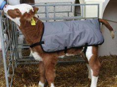 benessere animali allevamento