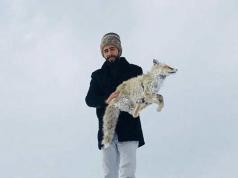 animali e gelo