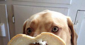 Cane mangia il pane