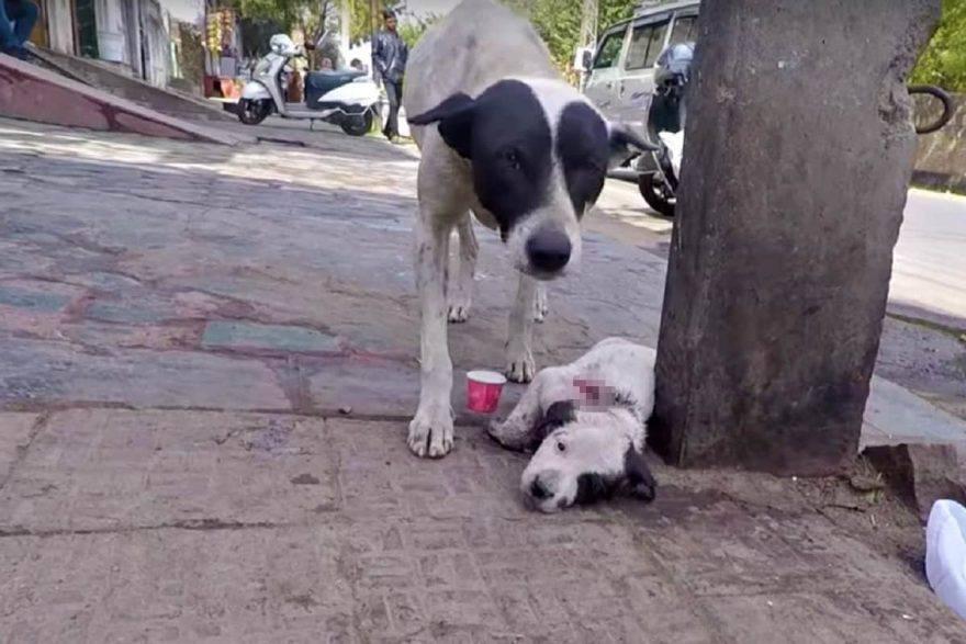 cucciolo ferito