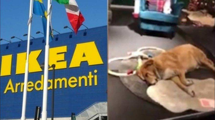 Ikea Presenta Ludwig La Nuova Collezione Per I Nostri Animali Domestici