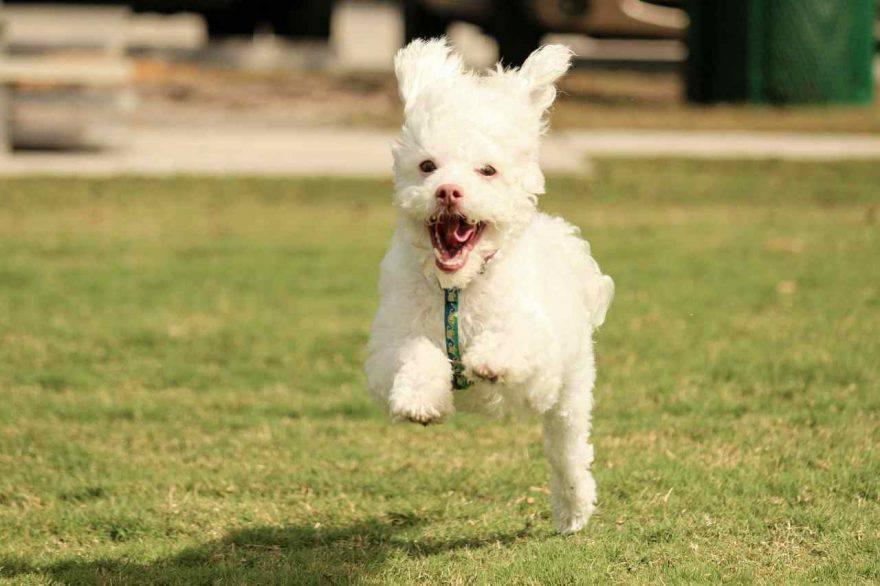 Come addestrare cucciolo
