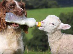 amore tra animali