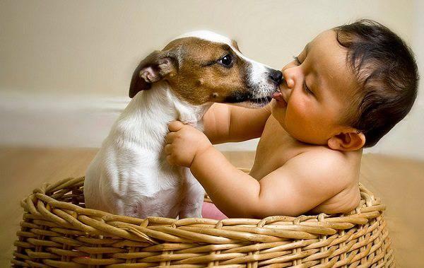 animali e neonati