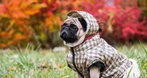 cane con cappottino per il freddo