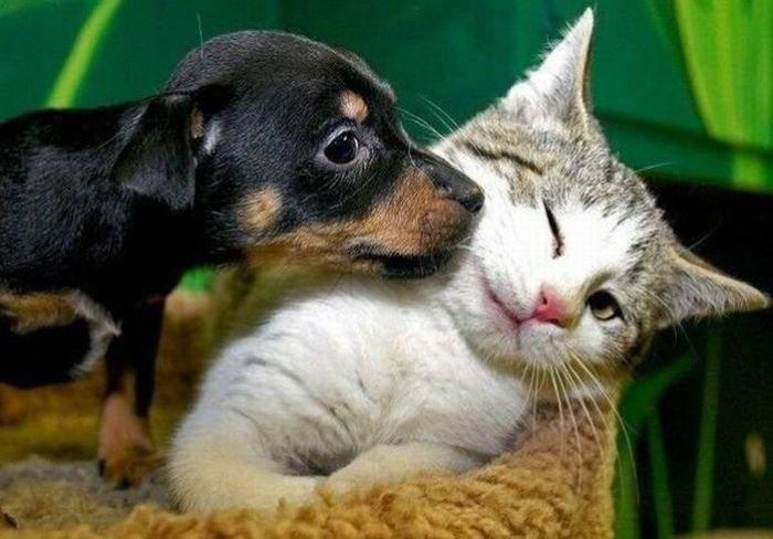 convivenza cane e gatto