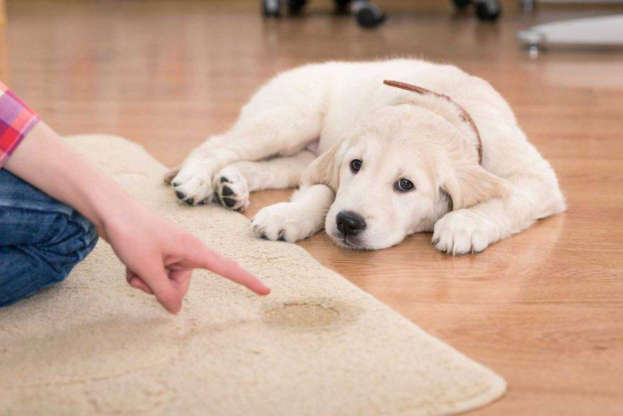 cane incontinenza pipì