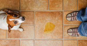 Il cane fa pipì in casa: cause e rimedi