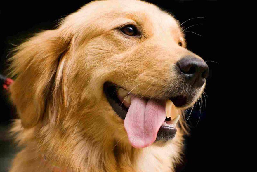 emozioni del cane