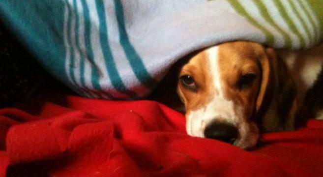 Cane al riparo dal freddo