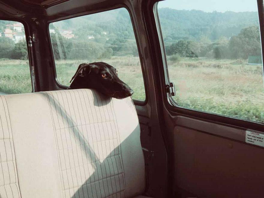 animali lasciati in auto