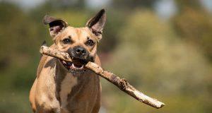 addestramento cane meticcio