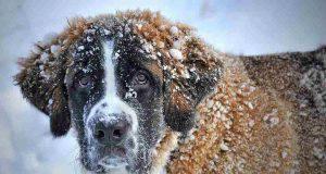 animali al freddo