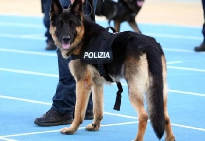 cane poliziotto trattamento