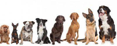 Cani da guardia per appartamento
