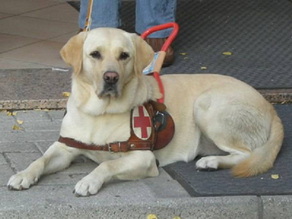 cane previene crisi epilettica