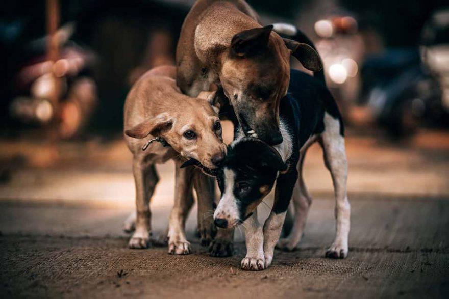 adottare un cane meticcio