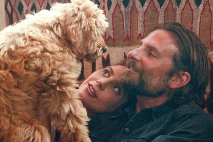 attori amanti dei cani
