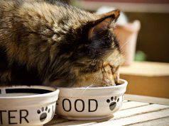 dieta del gatto