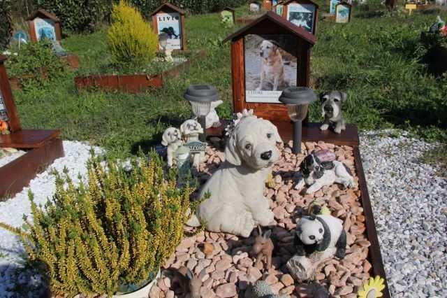 cani sepolti con padroni