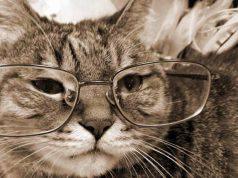 Come riconoscere l'età del gatto