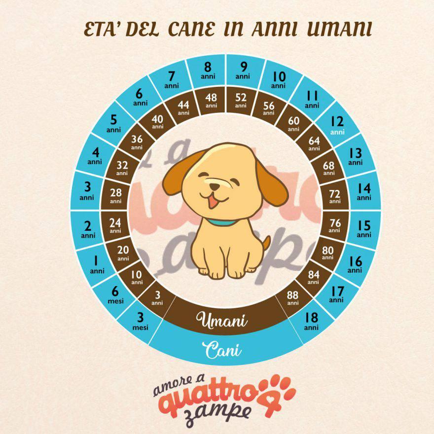 infografica età umana del cane