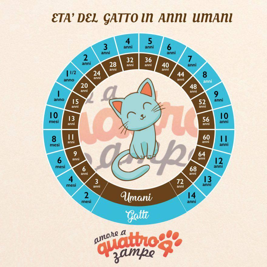 infografica età umana del gatto