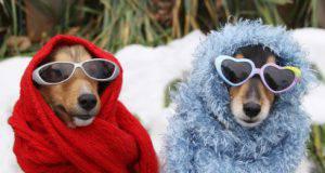 cani coperti dal freddo