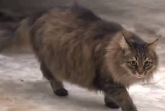 istinto materno gatti