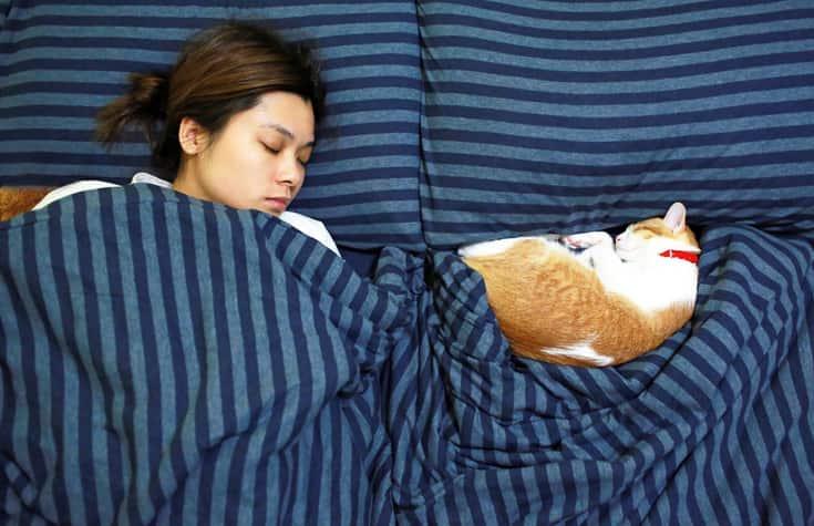 gatto dorme nel lettone