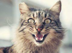 un gatto felice