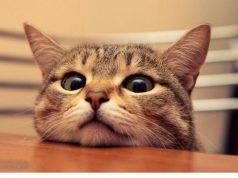 Il gatto ci segue ovunque: scopri perché