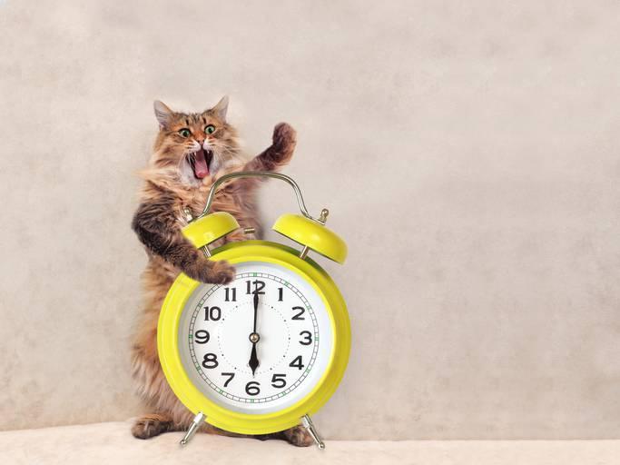 gatto sveglia presto