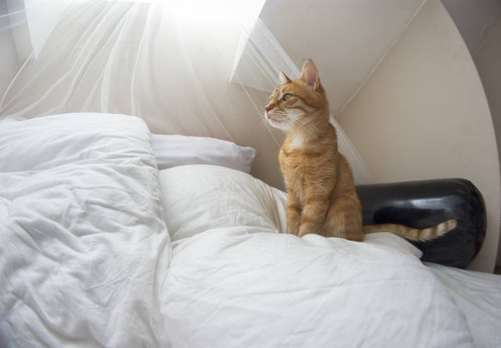 gatto sveglia