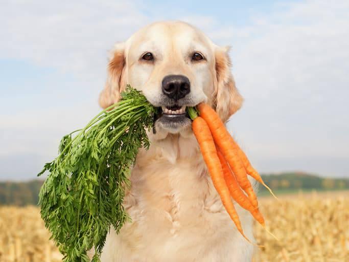 frutta e verdura nell'alimentazione del cane