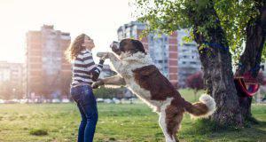 cane che salta addosso