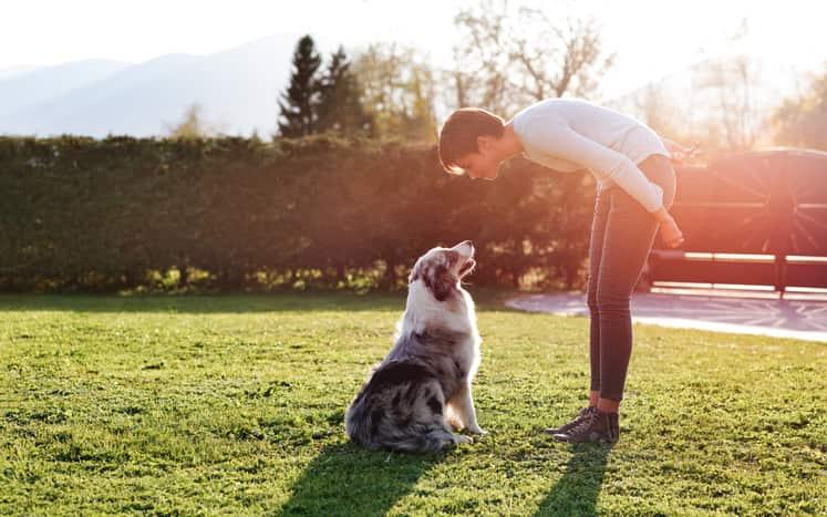 cane che salta addosso come educarlo