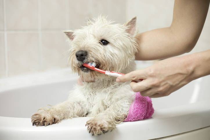 pulizia dei denti del cane