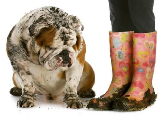 come togliere il cattivo odore del cane