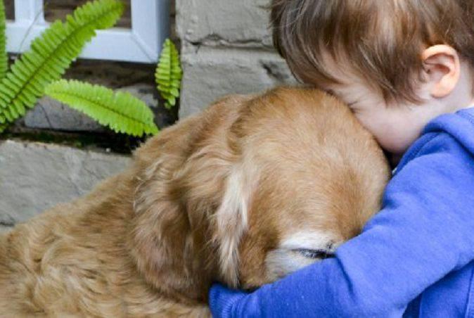 lutto per il cane
